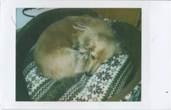 Scan100013